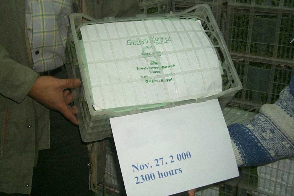 exporter green beans
