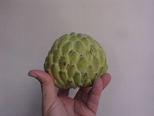 Gadco Custard apple