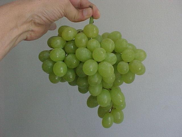 Sugraone grapes