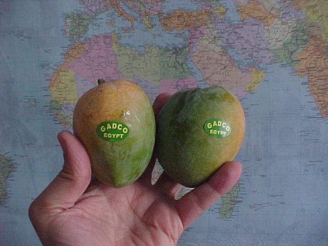 Alphonse mango