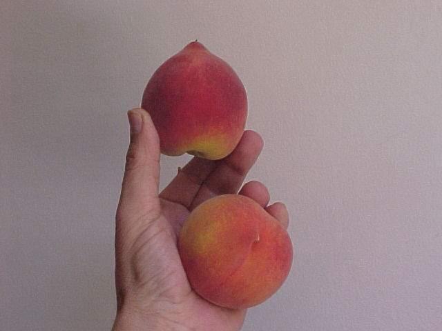 Peach export