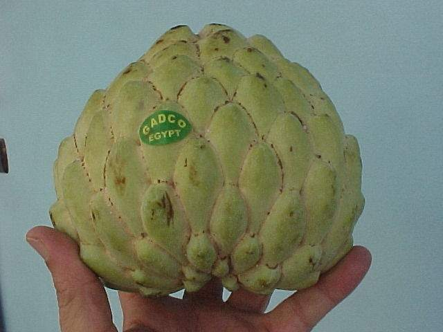 Giant custard apple